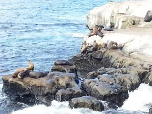 So. Many. SEALS.
